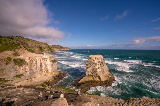 Visit the Muriwai Gannet Colony
