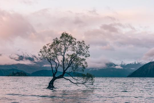 Visit New Zealand's most famous tree